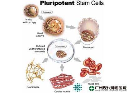 CellRep:人胚胎干细胞可被诱导成为精子前体细胞