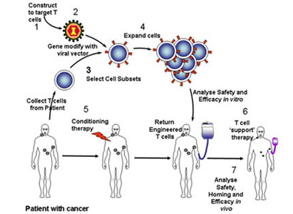 Gene Targeted Therapy,cancer