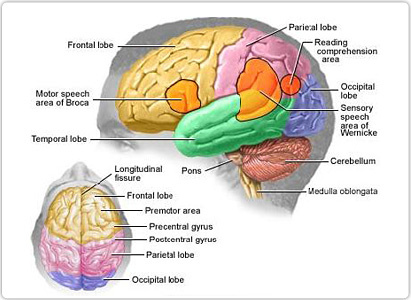 brain tumor symptoms, brain cancer symptoms,symptoms of brain tumor,brain tumor signs and symptoms